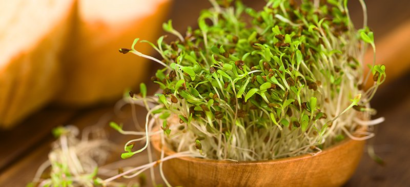 Alfalfa Benefits & Uses for Improved Health